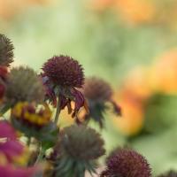 Flora_Summer_s_end