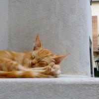 Under_18_Italiancat3_