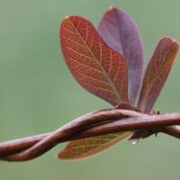 Flora_New_life_FFF