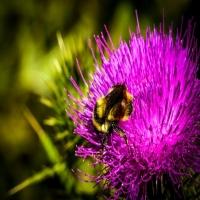 Flora_bee