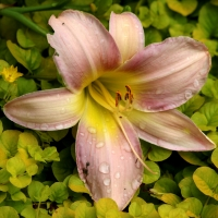 Flora_lily17_04x