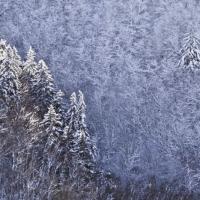 Paul Heyman - Winter Blues